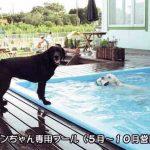 ワンちゃん専用プール