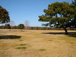 遠州灘海浜公園の画像