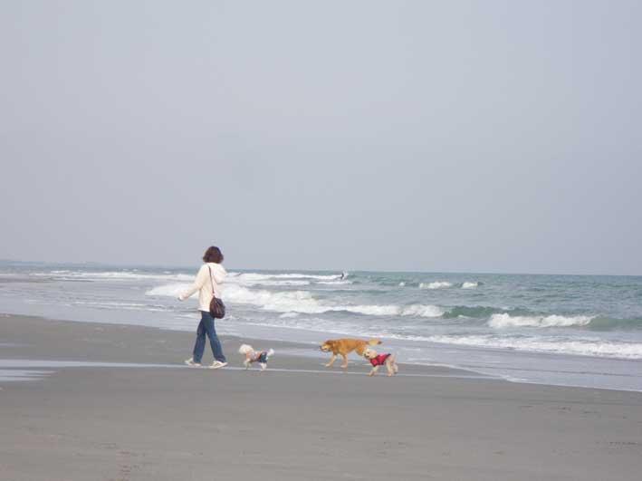 白須賀海岸の画像