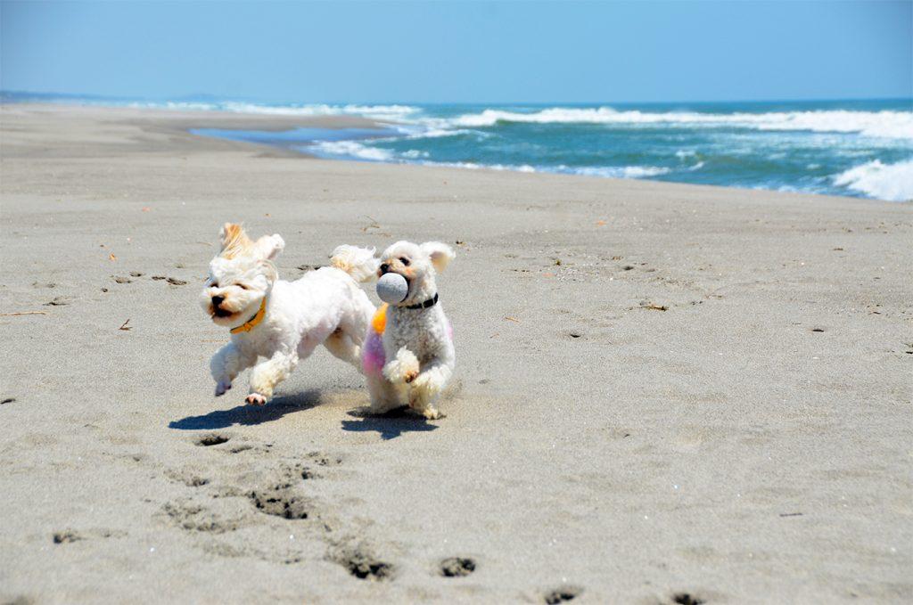 看板犬の「リオ」「ゆめ」の写真
